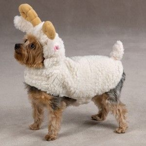 Zack Zoey Lil Sheep Halloween Dog Costume MD